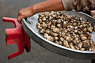 mobile mushroom vendor, cholon market, chinatown, ho chi minh city, vietnam