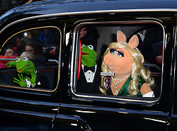 Kermit The Frog, Miss Piggy and Constantine attends Muppets Most Wanted VIP film screening of sequel to last year's comedy, which sees the return of the Muppets as they embark on a global tour, getting caught up in an international crime caper at Curzon Mayfair, London, United Kingdom. Monday, 24th March 2014. Picture by Nils Jorgensen / i-Images