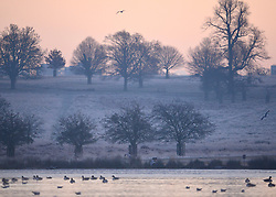 © Licensed to London News Pictures. 02/12/2012. Richmond, UK Deer, joggers and dog walkers wake up to a golden frosty morning in Richmond Park, Surrey, today 2nd December 2012. Photo credit : Stephen Simpson/LNP