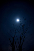 Moon and plant. Copyright 2006 Lance Cheung