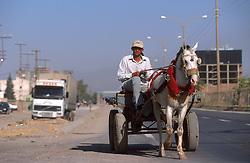 TURKEY KIZILTEPE JUL02 - Horse-drawn carts are the predominant mode of transport in the countryside...jre/Photo by Jiri Rezac..© Jiri Rezac 2002..Contact: +44 (0) 7050 110 417.Mobile:  +44 (0) 7801 337 683.Office:  +44 (0) 20 8968 9635..Email:   jiri@jirirezac.com.Web:     www.jirirezac.com