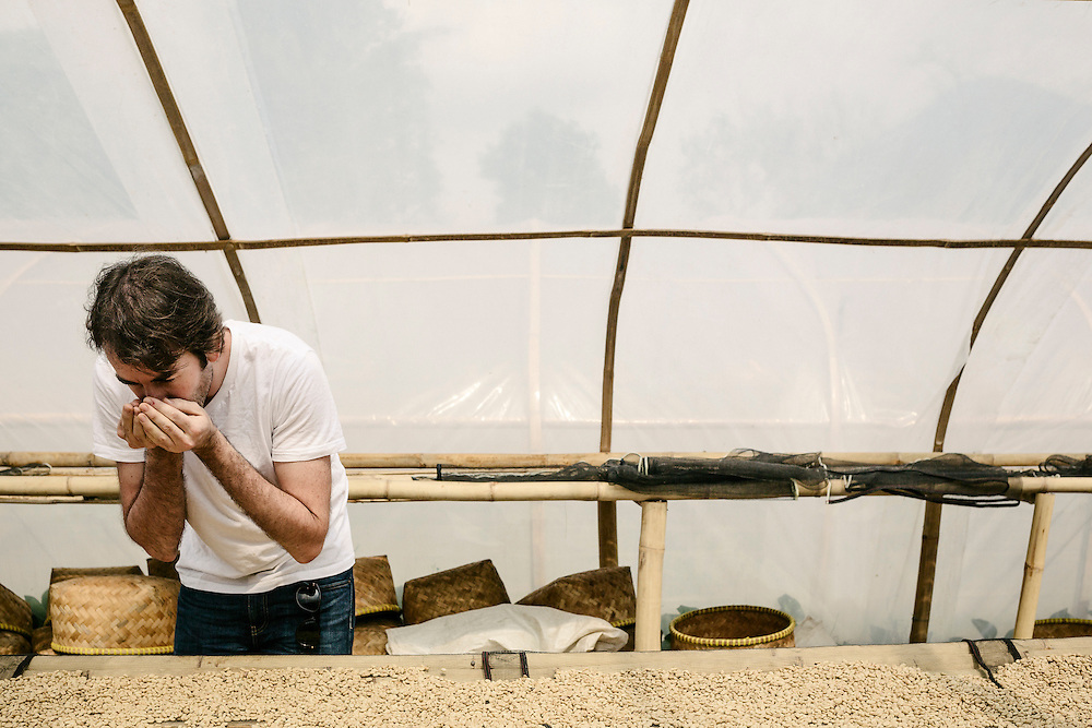 Antoine Netien, director of Coutume, examines coffee beans drying at the Klassic Bean cooperative. Bandung, Indonesia.