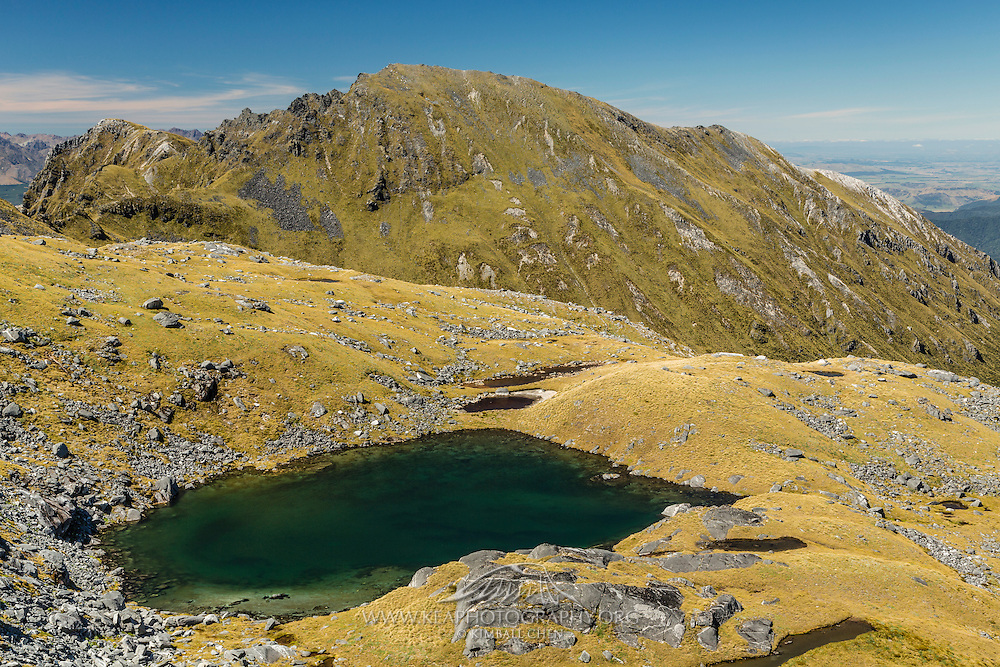 A green-stained tarn amongst the golden tussock along the ascent to Mt Burns, Fiordland, New Zealand