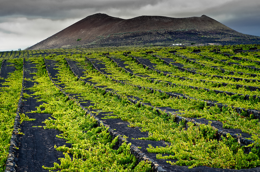 La Geria, winegrowing area. Lanzarote. Canary Islands, Spain