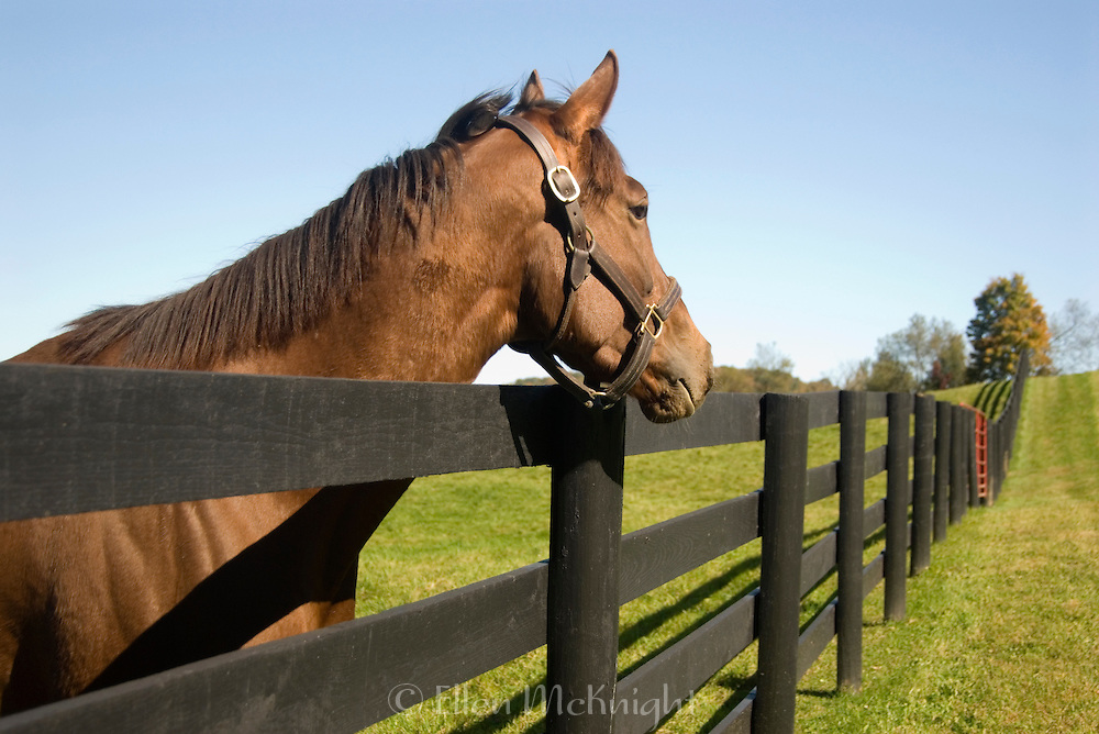 Horse Looking over a Fence in Dutchess County, New York