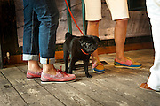MINNIE THE PUG FROM ART WEDNESDAY, Design Your Own Timberland breakfast and Autumn/ Winter 2011 preview. Timberland. 1 Fournier St. London. Followed by an art tour by Julia Royce. 8 June 2011. <br /> <br />  , -DO NOT ARCHIVE-&copy; Copyright Photograph by Dafydd Jones. 248 Clapham Rd. London SW9 0PZ. Tel 0207 820 0771. www.dafjones.com.