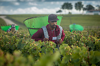 Portuguese migrant workers work the vineyards in Bordeaux, France
