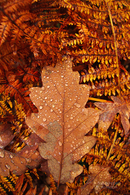 Leaf fallen over the forest ground