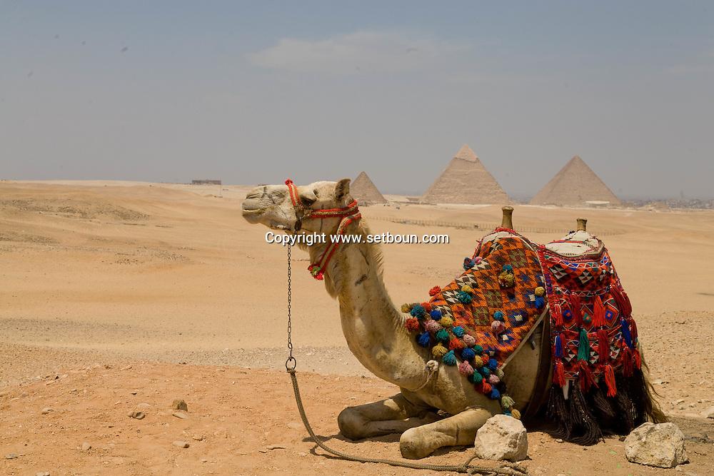 Egypt. Cairo - The pyramides of Gizah Cairo  /  les pyramides de Gizeh Le caire - Egypte   /  EGYPGIZ031