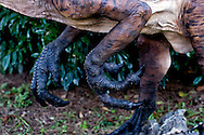 """Roma 30 Dicembre 2014<br /> """"Dinosauri in Carne e Ossa"""", mostra di dinosauri e altri animali preistorici estinti, a grandezza naturale, allestita dall' Associazione paleontologica ambientale, all'Università La Sapienza di Roma. La mostra sara aperta fino al 31 Maggio 2015. La scultura di un  Deinonychus  Antirrhopus, particolare della zampe anteriori.<br /> Rome December 30, 2014<br /> """"Dinosaurs in Flesh and Bones"""", an exhibition of dinosaurs and other prehistoric animals extinct, to life-sized, prepared by Association paleontological environmental, a La Sapienza University of Rome. The exhibition will be open until May 31, 2015. The sculpture of  Deinonychus  Antirrhopus, particularly the front legs."""