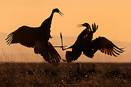 Cranes of the San Luis Valley & MV Wildlife Refuge