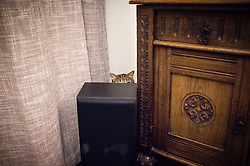 Tabby cat hiding and waiting to pounce from behind furniture, Leicester, England, UK.