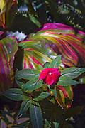 Purple, Flower, Botanical Gardens, Balboa Park, San Diego, Ca