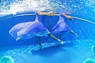 Ballerinas dancing underwater in a swimming pool.MR. Model relased photo.