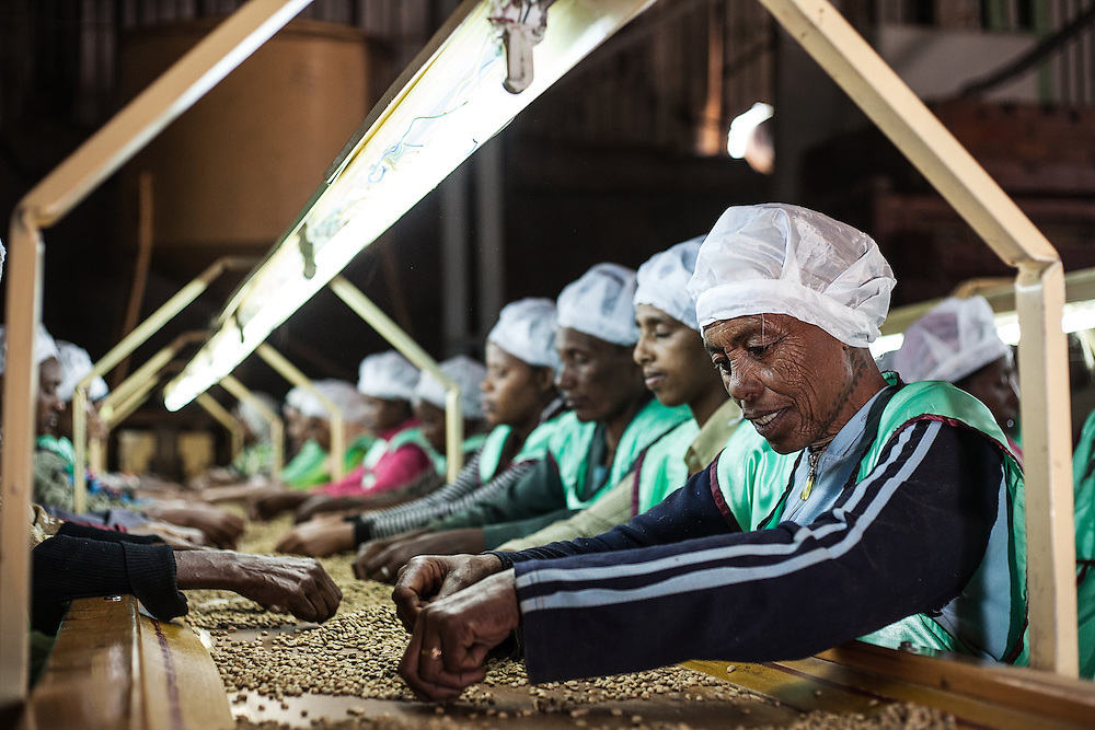 Coffee is sun dried on Burka Gudina farm in Limu region, Ethiopia, and sorted in Addis Ababa.