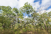 Dondo Forest, Beira, Sofala Province, Mozambique