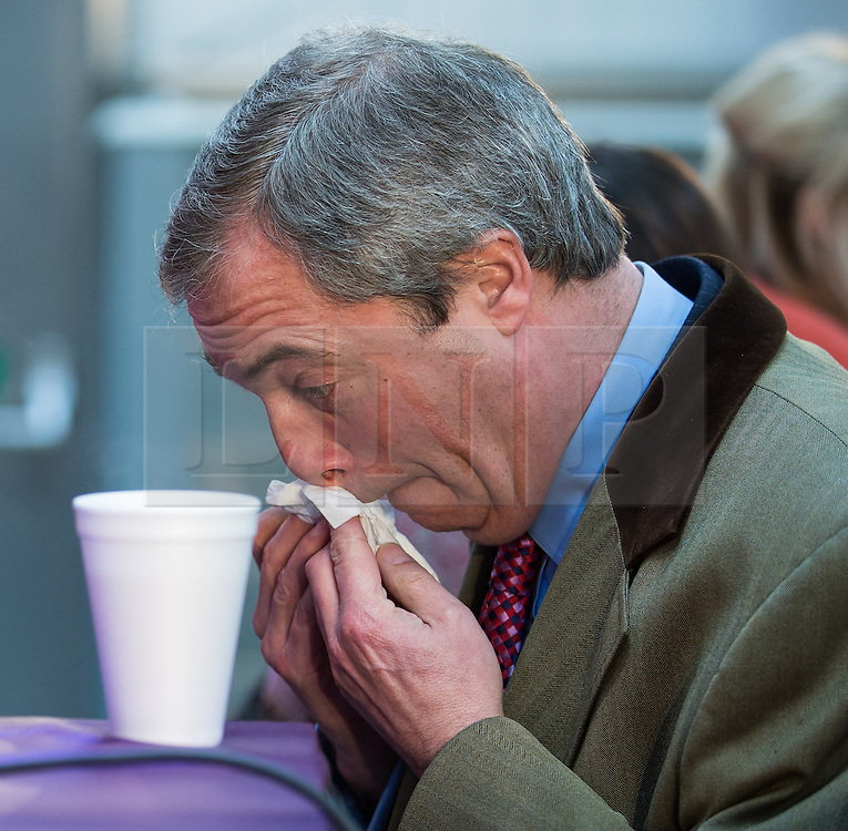 © Licensed to London News Pictures . 23/03/2015 . Middleton , UK . Nigel Farage blows his nose . UKIP leader Nigel Farage , Deputy Leader Paul Nuttall and Economics Spokesman Patrick O'Flynn announce UKIP's economic policy at Concept Metal Products and Co Ltd in Middleton , Lancashire . Photo credit : Joel Goodman/LNP