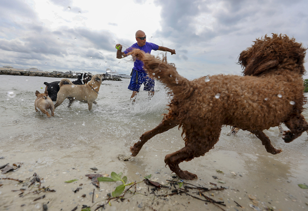 Dog trainer and walker, George Gagalis, 68, of Hyde Park prepares to throw a tennis ball as several dogs wait in anticipation near the water's edge Tuesday, May 29, 2018 at the dog park located along Davis Islands in Tampa. Despite projections of torrential downpours and flooding, a low-pressure vacuum sucked up some dry air, choking Alberto's rain engine and steering it away from Tampa Bay.