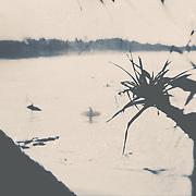 Fine art photograph at Noosa Main Beach by award winning Noosa Photographer Steve Allsopp