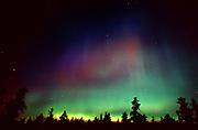 Northern lights (Aurora borealis) and forest<br />Sandilands Provincial Forest<br />Manitoba<br />Canada, Sandilands Provincial Forest, Manitoba, Canada