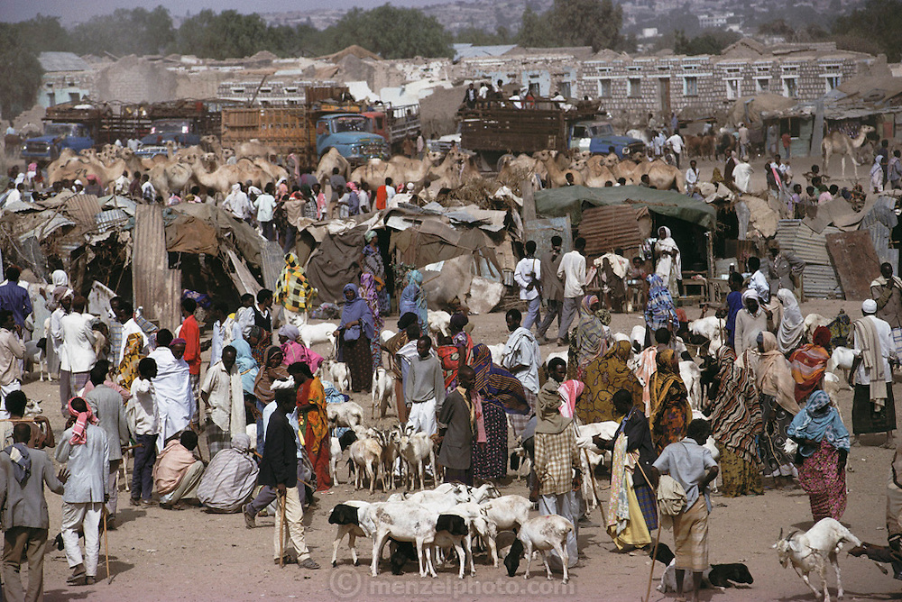 Livestock market with goats and camels in Hargeisa, Somaliland. Livestock is the main source of income in Somaliland. Somaliland is the breakaway republic in northern Somalia that declared independence in 1991 after 50,000 died in civil war. March 1992.