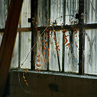 Abandoned interior of warehouse with plant growing through window frame