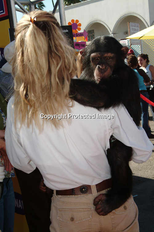Sable the chimp<br />