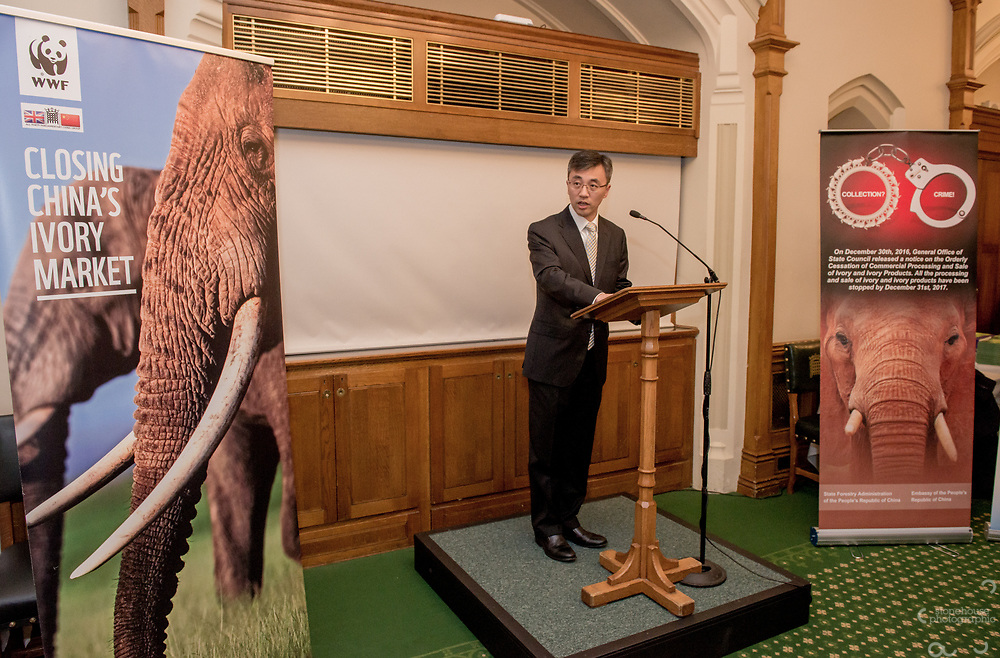 Chinese Embassy representative speaking during the Chinese Embassy and WWF-UK's reception to mark the closure of China's domestic Ivory Market, Churchill room, Palace of Westminster, London.<br /> Hosted by Mr Richard Graham MP.<br /> <br /> 31st January, 2018.