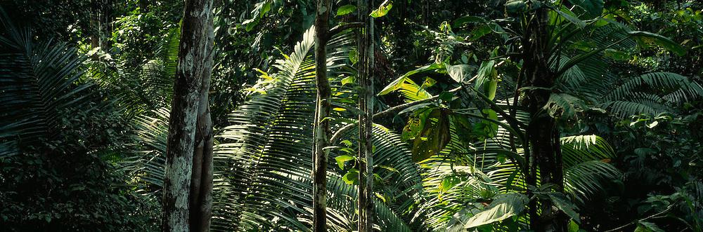 ECUADOR, ORIENTE, AMAZON Napo River (Amazon basin) rainforest