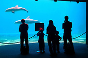 silhouette of a standing family, three adults and two children, in front of the dolphin pool at the aquarium