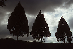 Silhouette of trees viewed against night sky,