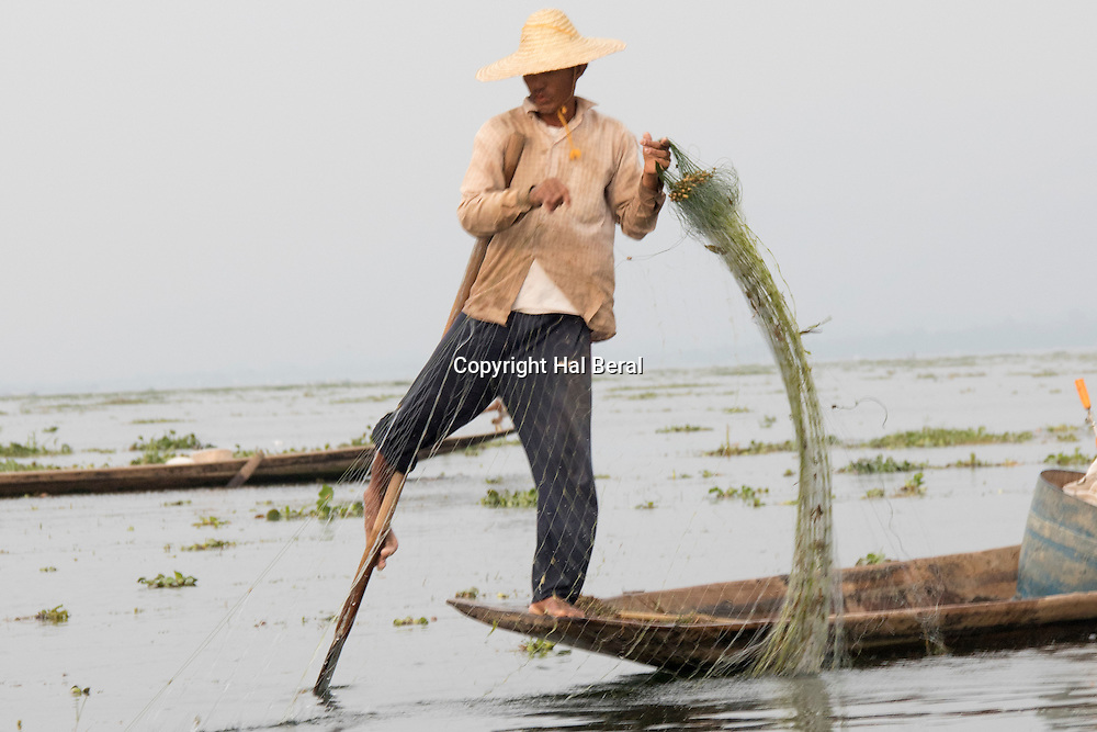 Intha fisherman rows his boat in unque one legged style keeping both hands free to tend his net<br /> Inle Lake, Myanmar