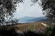 COVIBIO, COLLECTIVE wine producers , Italy, Liguria