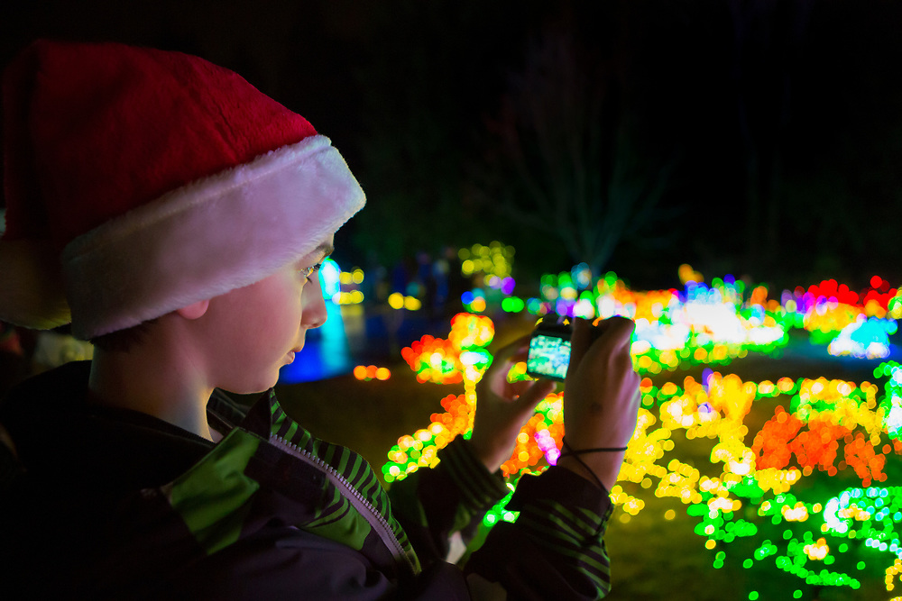 USA, Washington, Bellevue. Boy photographing at Garden d'Lights at Bellevue Botanical Garden during the holiday season.  MR