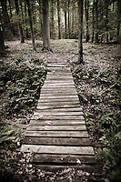 An old rickety plank bridge in a hardwood forest, Matland, USA.