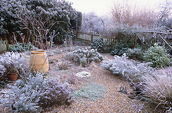 Sunrise in the gravel garden at Ketley's on a frosty morning in winter