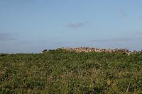 Stone wall on Inis Mor Aran Islands County Galway Ireland