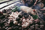 The main course for a feast at the Lagavale family home in Western Samoa is a freshly killed pig that roasts on a pile of volcanic rocks heated by fire. Also on the fire is the pig's liver and peeled taro root. Published in Material World, page 172. The Lagavale family lives in a 720-square-foot tin-roofed open-air house with a detached cookhouse in Poutasi Village, Western Samoa.