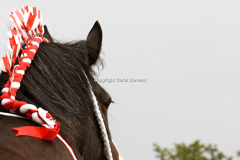 Heavy Horse classes at the Weeton Show 2011