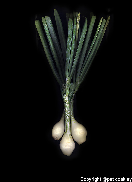 Sweet spring organic onions are as beautiful as they are tasty.