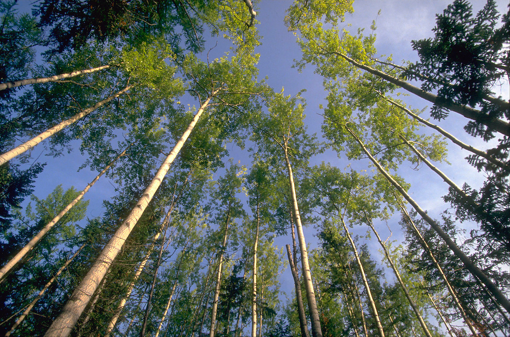 Siberian forest.   Accession #: 0.94.185.001.04