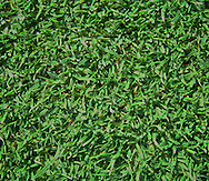 detailed image of grass form putting green