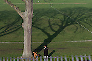 A pet owner waits for her dog to finish peeing against a large ash  100 year-old mature tree in south London's Ruskin Park, Lambeth/Southwark.