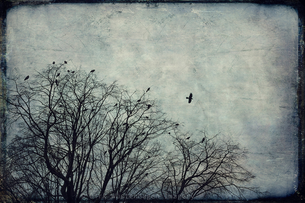Leafless tree with a flock of ravens on an autumn morning