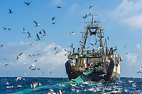 Commercial purse-sein trawler pulling in its nets and being surrounded by scavenging seabirds in the pelagic fishing grounds, Cape Canyon Trawl Grounds, South Africa