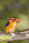 Birds Europe & Africa