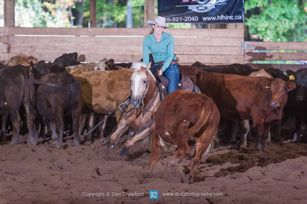 September 23, 2017 - Minshall Farm Cutting 5, held at Minshall Farms, Hillsburgh Ontario. The event was put on by the Ontario Cutting Horse Association. Riding in the Ranch Class is Lisa Mayer on Paldur Puff owned by the rider.