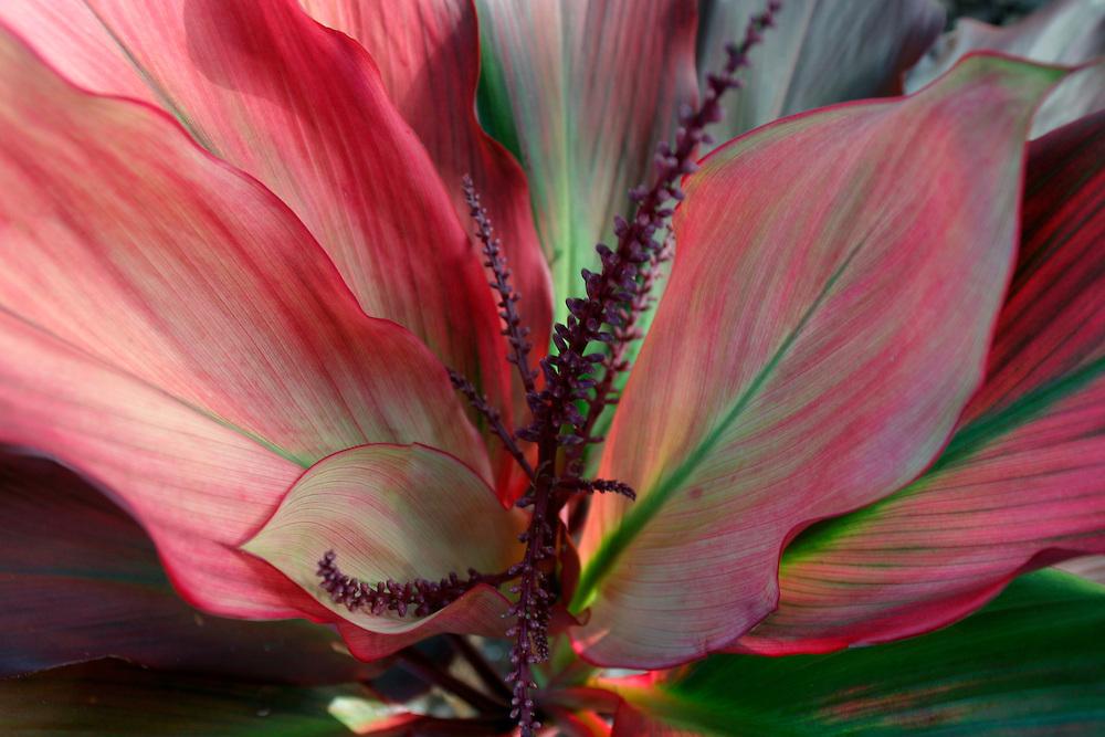 Detail of flower