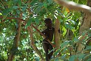 C'est l'heure des jeux dans les arbres. C'est l'école buissonière, la seule école où vont les enfants Jarawas.