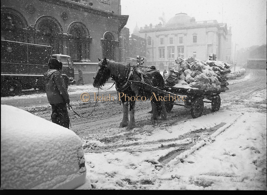 Dublin Snow Scenes.  (R48)..1897..14.01.1987..01.14.1987..14th January 1987..Following unprecedented overnight snow Dublin City almost came to a standstill.There was severe traffic disruption and many events scheduled for city centre venues were cancelled...Picture shows the cartman encouraging the horse to carry on through the blizzard.